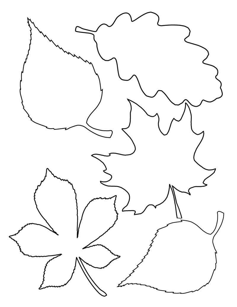 Free Printable Leaf Template
