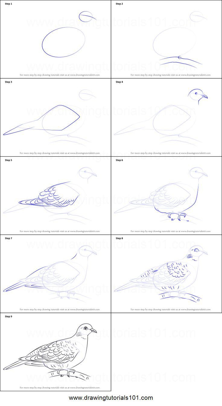 Dove Template to Print
